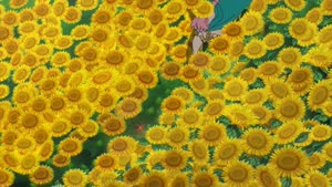 Rating: Safe Score: 89 Tags: animated character_acting koudai_watanabe one_piece running User: HIGANO